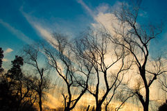 Silhouette Winter tree with Sunset 2 Stock Photography
