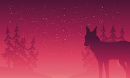 Silhouette of wolf and spruce Royalty Free Stock Image