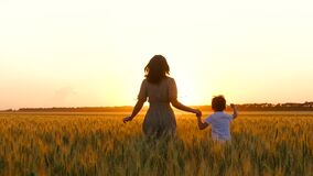 Silhouette of a woman and a child at sunset. A happy mother holds her son`s hand and they run across the wheat field