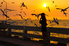 Silhouette of a woman at evening seaside gull was flying. Royalty Free Stock Image