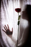 Silhouette of woman and red rose Stock Images
