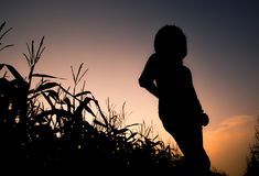 Silhouette woman standing on the corn field and beautiful twilight sky background. royalty free stock image