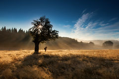 Silhouette of woman standing under tree in forest with fog Royalty Free Stock Photography