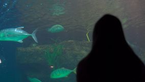 Silhouette of a woman watching incide of a huge aquarium full of exotic fish in an oceanarium.  stock video