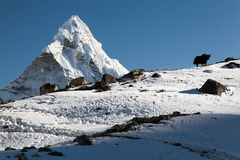 Silhouette of yak on the ridge and Ama Dablam Royalty Free Stock Images