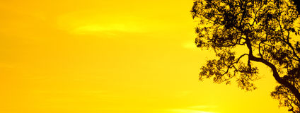 Silhouette  yellow sky and tree wallpaper and background Royalty Free Stock Photo