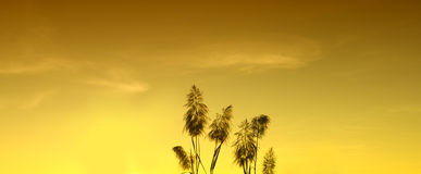 Silhouette  yellow sky wallpaper and background Royalty Free Stock Photos