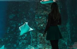 Silhouette of a young beautiful girl on the background of a large aquarium with stingrays and other various fish. Silhouette of a young beautiful girl on the stock images