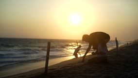 Turtle sanctuary. Silhouette of young couple in sun light release turtle to seaside at sunset, turtle  sanctuary hatchery located on the beach stock video