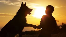 Silhouette of a young man shaking paw his favorite dog in a field at sunset, boy with a purebred pet German Shepherd walking on royalty free stock photography