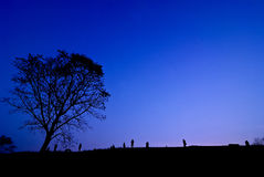 Silhouette of young photographer taking picture near tree of lan. Dscape during the sunset Stock Photos