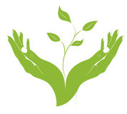 The silhouette of young plant in female hands. Royalty Free Stock Image