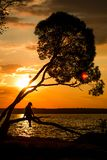 Silhouette of a young women sitting on the tree at sunset stock photo