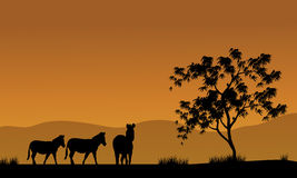 Silhouette of zebra in fields africa Stock Photo