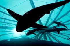 Silhouetted акулы Стоковая Фотография