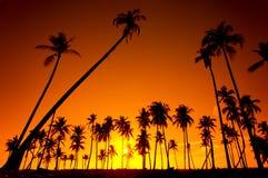 Silhouetted вала кокоса Стоковые Изображения RF