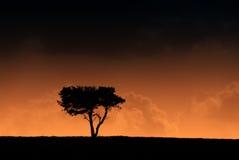 silhouetted вал Стоковые Изображения