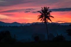 Silhouetted вала кокоса Стоковое Изображение