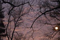Ветви дерева на сумраке стоковые фотографии rf