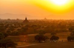 Бирманский табунить на заходе солнца в Bagan Стоковая Фотография RF
