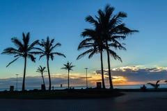 Silhouetted деревья рассвета океана пляжа Стоковое фото RF
