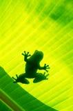 Silhouetted лягушки Стоковое Изображение RF