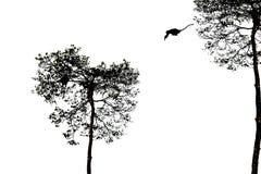 Silhouetted скакать обезьяны Стоковое Изображение RF