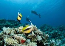 silhouetted скуба водолаза bannerfish Стоковое Фото