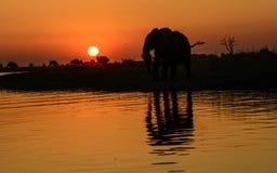 Silhouetted слон и отражение в африканском заходе солнца Стоковые Изображения