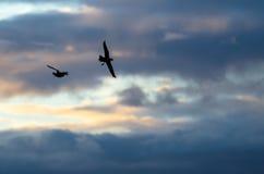 2 Silhouetted утки летая в красивое небо захода солнца Стоковое Изображение RF