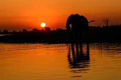 Silhouetted African elephant and reflection in water Stock Photography