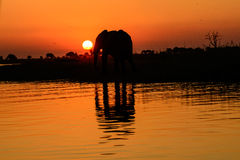 Silhouetted African elephant and shadow reflected in water Stock Photo