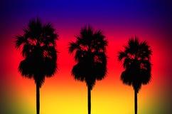 Silhouetted av kokosnöttree Royaltyfria Bilder