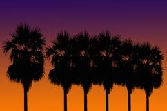 Silhouetted av kokosnöttree Royaltyfri Foto