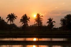 Silhouetted av kokosnöttree Royaltyfri Fotografi