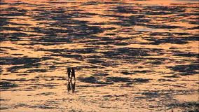 Silhouetted beach walkers at low tide stock video