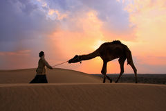 Silhouetted bedouin walking with his camel at sunset, Thar deser Royalty Free Stock Photo
