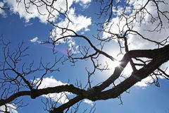 SILHOUETTED BRANCHES AGAINST SKY AND CLOUD Stock Image
