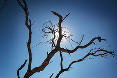 Silhouetted branches Royalty Free Stock Photography