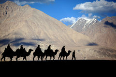 Silhouetted camel Royalty Free Stock Photography