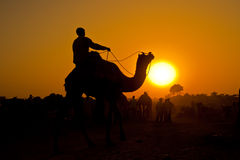 Silhouetted camel rider at sunset Stock Images