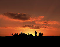 Silhouetted camels Royalty Free Stock Photography