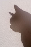 Silhouetted cat. Cat silhouetted behind backlit canvas screen shade royalty free stock photography