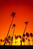 Silhouetted of coconut Royalty Free Stock Photo