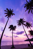 Silhouetted of coconut tree. During sunrise Royalty Free Stock Photography