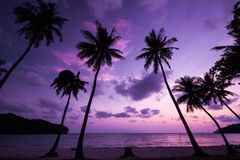 Silhouetted of coconut tree. During sunrise Royalty Free Stock Images