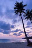 Silhouetted of coconut tree Stock Photos