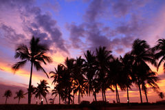 Silhouetted of coconut tree colorful sunset Royalty Free Stock Photos