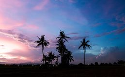 Silhouetted of coconut tree during sunrise. Silhouetted of coconut tree during sunrise Stock Images