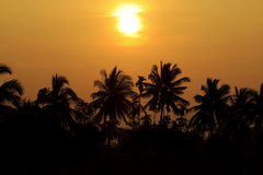 Silhouetted of coconut tree during sunrise.  Royalty Free Stock Photography